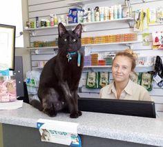 Новости про животных: Косоглазый кот талисман ветклиники.