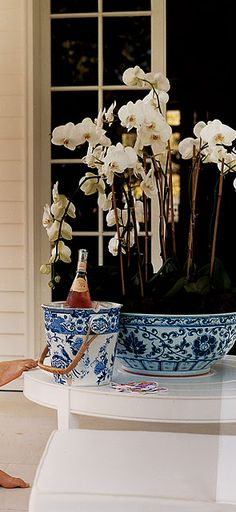 Orchids in a blue & white pot & wine chilling? How thoughtful of you! Would you like to share a glass?