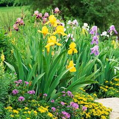 If you have a plant that grows tall, add dimension with something low-growing. Here, the bright yellow blooms of low-growing perennial Sedum kamtschaticum and annual purple verbena make a splendid carpet at the feet of tall purple and yellow irises and spiky annual yellow butter and eggs (Linaria vulgaris). If you don't want butter and eggs to reseed, keep it deadheaded./