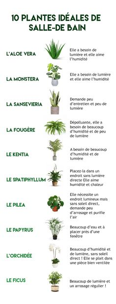 Inspirations for a bathroom ouaouh! Inspirations for a bathroom ouaouh! Indoor Garden, Garden Plants, Indoor Plants, House Plants, Home And Garden, Balcony Garden, Diy Jardim, Plantas Indoor, Pinterest Inspiration