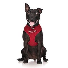 DO NOT PET Red Color Coded NonPull Front and Back D Ring Padded and Waterproof Vest Dog Harness PREVENTS Accidents By Warning Others Of Your Dog In Advance L ** Click image to review more details.