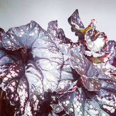 Amethyst, Leaves, Texture, Crystals, My Love, Plants, Instagram, Surface Finish, Amethysts