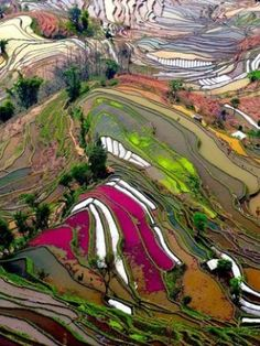 Thierry Bornier took this amazing photograph of terraced rice fields in Yunnan, China. The aerial view of the different sections of the rice fields shows a wide range of colors, and National Geographic chose it as Photo of the Day on June Places Around The World, Around The Worlds, Beautiful World, Beautiful Places, Amazing Places, Beautiful Scenery, Birds Eye View, National Geographic Photos, Aerial Photography