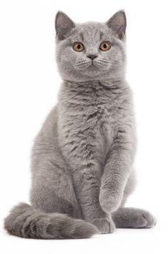 photos de chats - Recherche Google