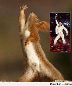 Disco Squirrel