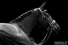 www.pegasebuzz.com/leblog/ | Horse in Photography by Nikki de Kerf : Horses in black and white