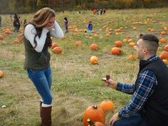 Pumpkin patches prov