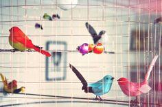 Les Oiseaux et Louis Vuitton