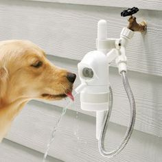 It's a doggie hydration station! Make sure your pet stays hydrated during hot days outside with this water-fountain fixture.