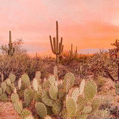 Desert Aesthetic, Plant Aesthetic, Nature Aesthetic, Aesthetic Drawing, Cactus Care, Cactus Flower, Cactus Cactus, Flower Plants, Cactus Paint