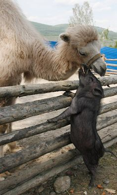 Hello friend! I like your new cologne.