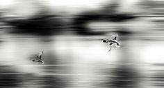 Flying together! by Aziz Nasuti on 500px