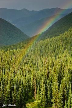 In the Pacific Northwest, it can rain any month of the year.  In the hot weather of August, rain comes in the form of intermittent showers broken by periods of sunshine.  When that happens you often see rainbows.  This rainbow was captured from the Palisades Lakes Trail near Sunrise in Mount Rainier National Park, Washington State, USA.