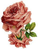 I love everything roses...the look, the smell...I use rose soap, rose lotion, rose perfume.  Obsessed.