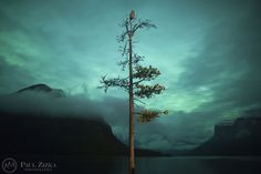 WOW! The Owl and the Tree - Astrophotographer Paul Zizka sent in this photo of an aurora with a special guest, taken at the Minnewanka boat docks, Banff National Park, Canada, on Oct. 8, 2012.