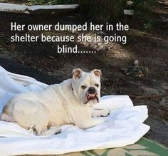 """Dog's owner left her at shelter because dog is losing her sight""  No words..."