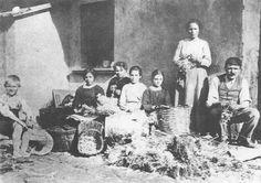 Bachicoltura in un cortile di via Agnesi (1940 ca.)