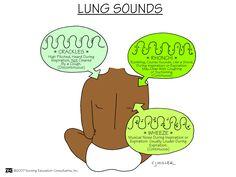 Lung Sounds Nursing School: Assessment Mnemonics by felicia Nursing School Tips, Nursing Career, Nursing Tips, Nursing Notes, Nursing Programs, Nursing Schools, Bsn Nursing, Rn Programs, Nursing Degree