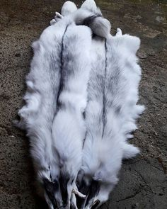http://ift.tt/2yx2LPQ #designer #new #modern #color #arctic #fox #real #fur #foxfur #animal #amazing #cool #etsy #clothing #collection  #fw18 #love #fall2018 #fall2018collection #white #gray #jacket #coat #luxury #accessories #handmade #worldwide #photooftheday #photography #picoftheday