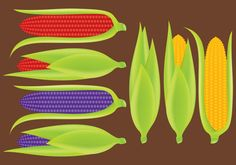 Ears of Corn Vectors 265616 -   The corn is a versatile vegetable for food industry, green energy industry and more, use this vector file for illustrate your projects about vegetables, food, farm, energy and organic products.  - https://www.welovesolo.com/ears-of-corn-vectors-2/?utm_source=PN&utm_medium=welovesolo%40gmail.com&utm_campaign=SNAP%2Bfrom%2BWeLoveSoLo