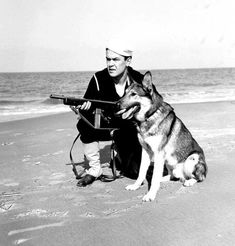 United States Coast Guardsman with Reising submachine gun and dog on a beach in the United States, circa Photographer Gates Source United States Coast Guard Identification Code USCG No. Military Working Dogs, Military Dogs, Military Photos, Military History, Police Dogs, Coast Guard Beach, Us Coast Guard, Coast Gaurd, Diesel Punk