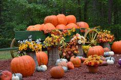 Get your pumpkin at Burt's Farm in Dawsonville, Georgia!