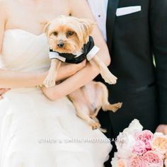 Gallery page with the most adorable photos of pets at wedding. Get inspired on how to incorporate animals on your wedding day. // My Sweet Engagement // mysweetengagement.com/galleries/pets