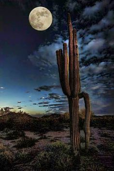 Saguaro with Moon