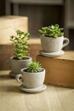 Concrete Pots with Distressed Motif by Vagabond Vintage®