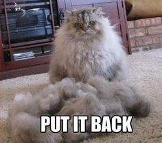Funny cat - Put it back - http://jokideo.com/funny-cat-put-it-back/