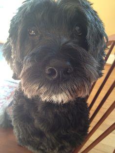 My portie Bailey