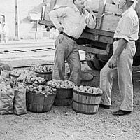 Apples and peddlers, Steele, Missouri, 1938 Apple Unit, Johnny Appleseed, Apple Seeds, Thematic Units, Timeline, Missouri, Homeschooling, Classroom, Study