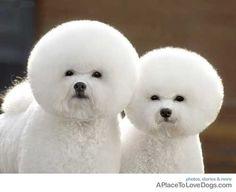 Fluff puffs
