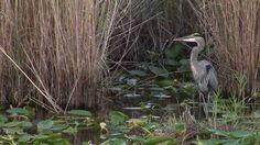 Everglades National Park - Florida - USA- Travel & Discover #florida #everglades #alligator #swamp #nature #landscape #usa