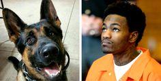 Jethro-police-dog-22