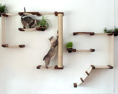 The Cat Mod - Garden Complex - Free US Shipping*