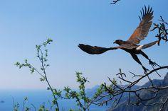 Le Ali nel Vento - Birds of Prey Experience, Positano: See 64 reviews, articles, and 51 photos of Le Ali nel Vento - Birds of Prey Experience, ranked No.14 on TripAdvisor among 21 attractions in Positano.