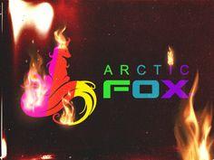 Arctic Fox: Kristen Leanne's former employees allege toxic behavior - Insider