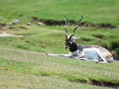 Mahavir Harina Vanasthali National Park - Hyderabad, Telangana, India