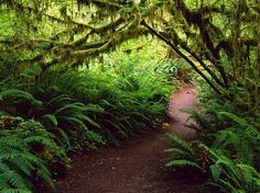 Olympic-National-Park-Pictures