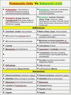 640 Biology Ideas Biology Biology Classroom Teaching Biology