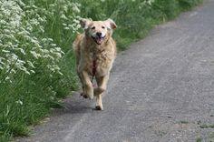 Tilaa ilmaiseksi YuMOVE Dog Näytepakkaus. Näyte on saatavilla vain Suomeen. Yksi näytepakkaus per asiakas/talous