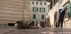 The cats of Kotor