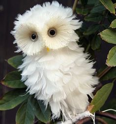 The White Owl OMgoodness! This owl has been coiffed; lol, beautifully, too! Funny Bird Pictures, Baby Animals Pictures, Cute Animal Pictures, Cute Baby Animals, Owl Pictures, Colorful Animals, Colorful Birds, Nature Animals, Wild Animals
