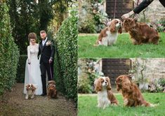 Bride & Groom with their pet dog at their wedding. Photo by Sarah Vivienne Photography, UK Photography Uk, Pet Dogs, Pets, Spring Wedding Flowers, Wedding Photoshoot, Vivienne, Bride Groom, Your Dog, Weddings