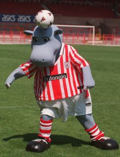 Stoke City archive: Bring on the hippo! When Pottermus came seventh in player of year vote | Stoke Sentinel