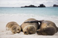 Louise Dugas rêvait des îles Galapagos depuis son enfance. Enfin, elle a pu…