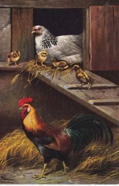 Artist-Signed-ALFRED-SCHONIAN-Hen-on-Nest-Chicks-Rooster-Series-838-postcard