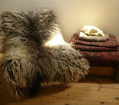 Sheepskin rug (the sheep wasn't killed to make it)