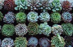 piante grasse - Cerca con Google